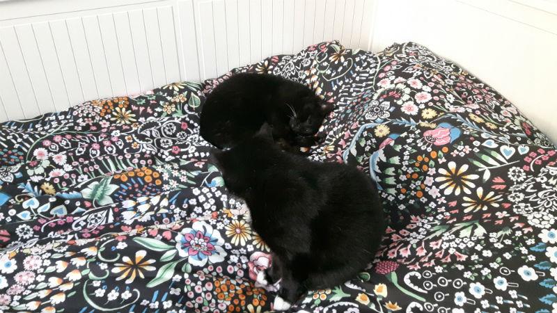katten op bed