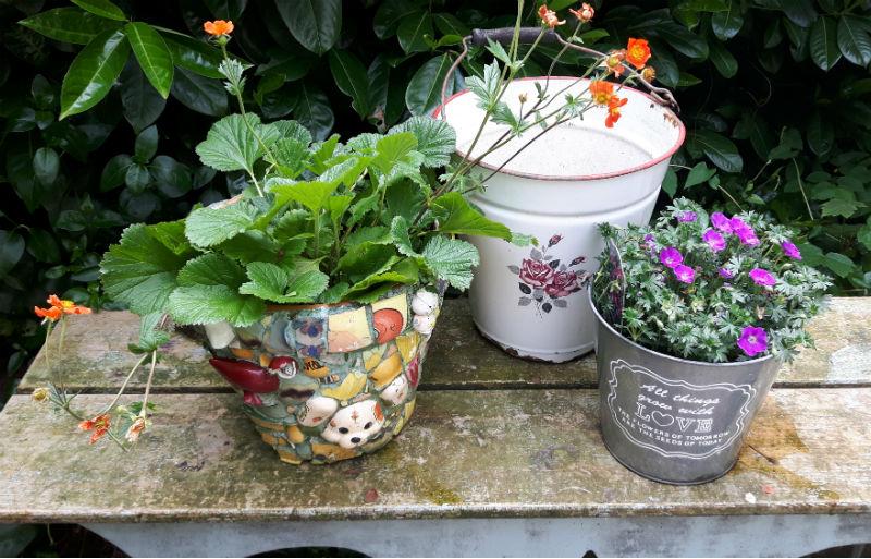 Planten Buiten Journey