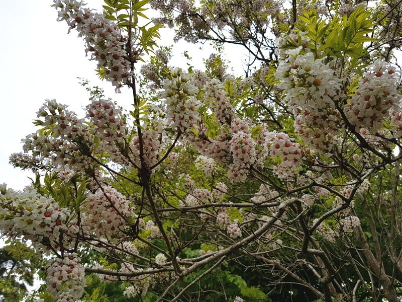 Botanic Garden Oxford Bloesem